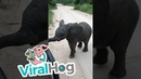 Elephant Calf Comes Over to Play || ViralHog