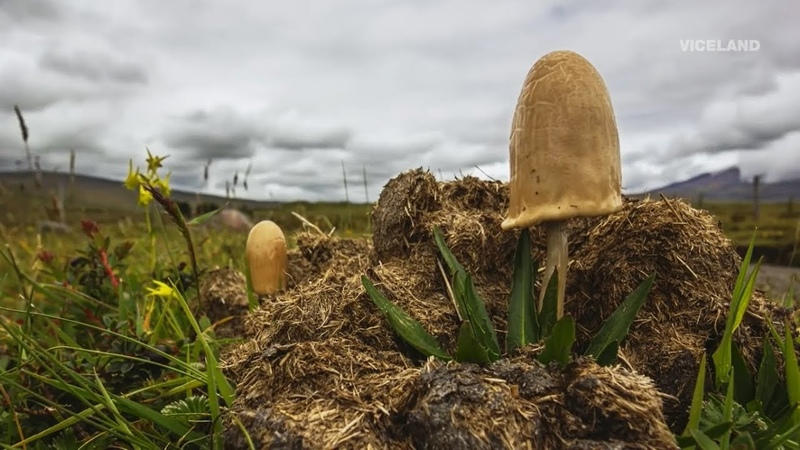 ПСИЛОЦИБИНОВЫЕ грибы. МИКРОДОЗИНГ. Дорога к высшим состояниям сознания.