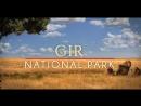 Нац. парк Гир - Живая природа - Гуджарат - Индия (Gir National Park _ Wildlife _ Gujarat )
