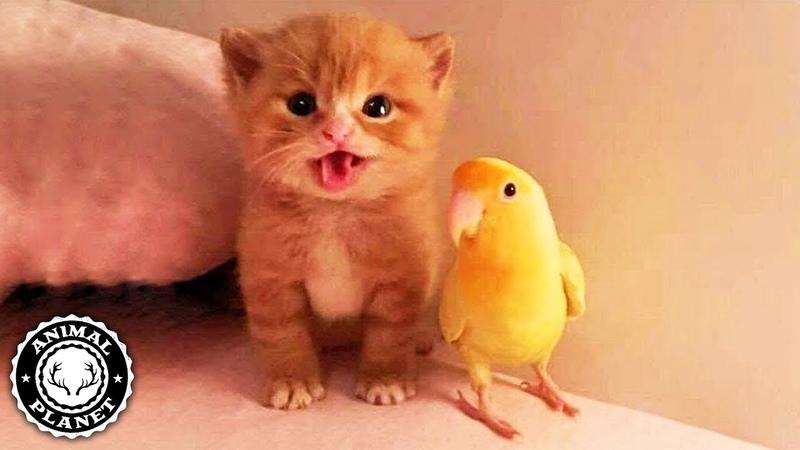 Cute Is Not Enough 🔴 Funny Cats and Dogs Videos Compilation (2019) Perros y Gatos Recopilación