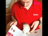 Котенок читает книгу вместе с хозяином