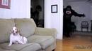 ПОПРОБУЙ НЕ ЗАСМЕЯТЬСЯ - Смешные Приколы с Животными до слез, смешные коты, funny cats 92