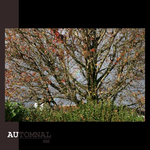 RM альбом Automnal
