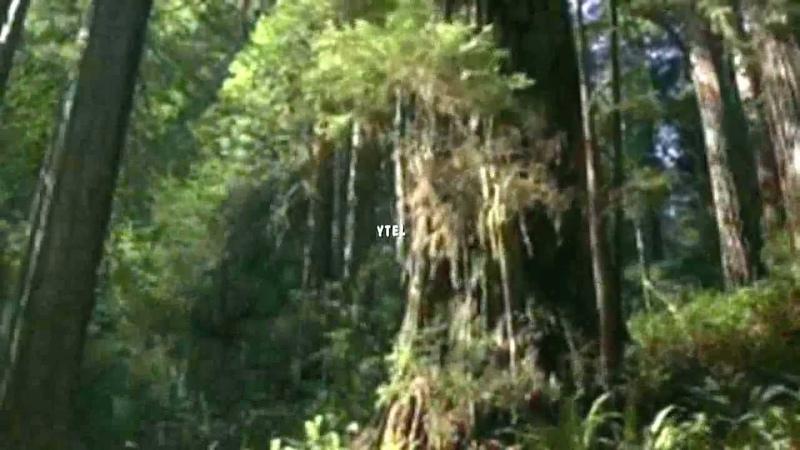 Merlins Magic - Chakra, Meditation, Music New Age - Heart Of Reiki