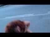 Пьяные Проститутки что то не поделили 18+ Уличные драки RU