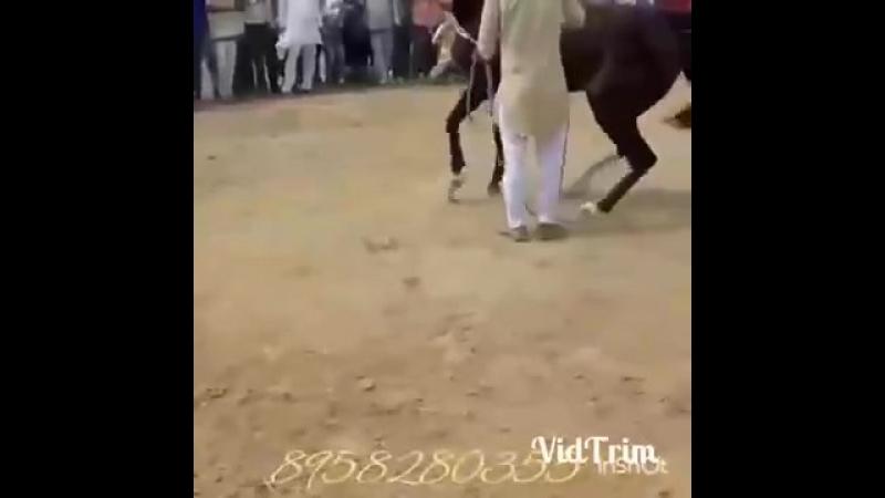 V фантастика конь танцует лучше всех 1 mp4