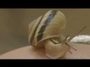 Серия Snail Secret для лица с муцином улитки