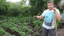 Как окучивать картошку вручную тяпкой мастер класс