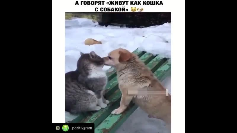 Как кошка с собакой ❤️