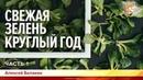 Свежая зелень круглый год. Алексей Балакин. Часть 1