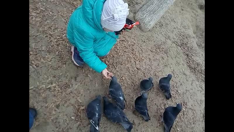 Доця кормит голубей