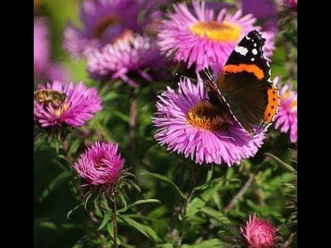 Топ цветов способных задавить самые злостные сорняки за забором