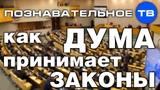 Как Дума принимает законы (Познавательное ТВ, Евгений Фёдоров)
