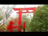 Музыка в Японском Саду (приглашение на встречу 14 октября)