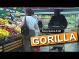 GORILLA (REMI GAILLARD)