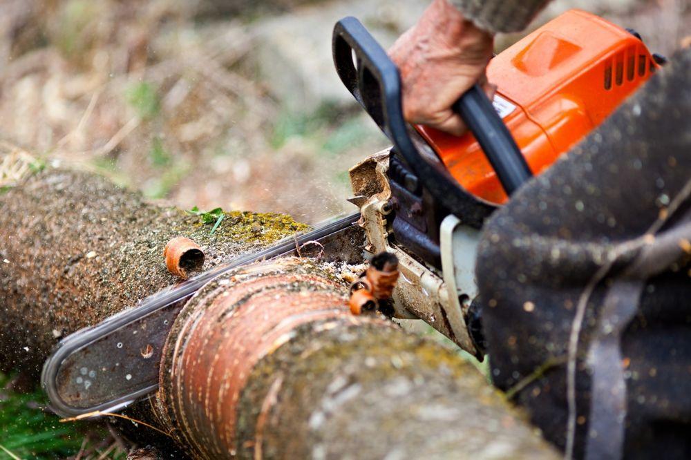 В Зеленчукском районе будут судить мужчину за незаконную рубку деревьев