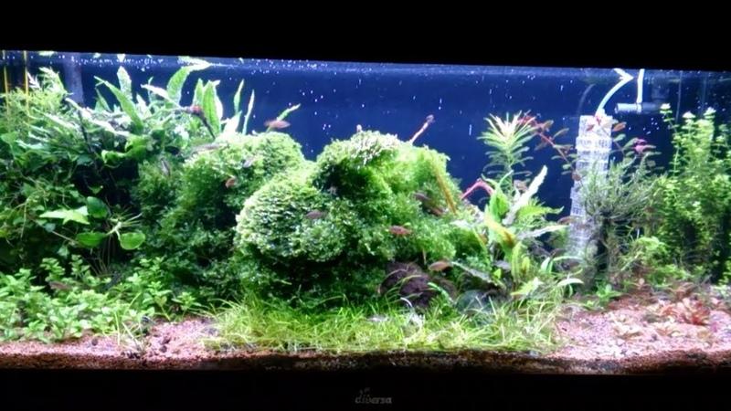 Аквариум после прополки растений и подмены воды Водоросли уходят Мои ЗооНяшки