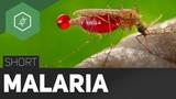 Was ist Malaria! - TheSimpleShort