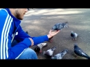Кормления голубей ))