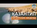 Казантип. Отдых в Крыму. ОГРОМНЫЕ МЕДУЗЫ. Мысовое
