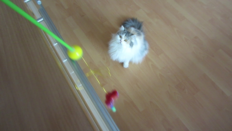 Oops! Fluffy does not want to play your favorite game...
