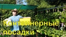 Помидор Огурец перец Огород Контейнерные посадки