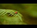 Насекомые Минускулы Minuscule 2012 41-60 серии