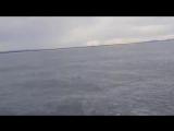 Сюрприз от кита