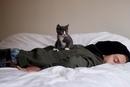 Почему, человек глядя на спящую кошку умиляется, а кошка глядя на спящего человека думает: о…