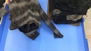 ж115 1 Пальто женские экстра Швейцария Упаковка 19 78 кг Цена 696 руб кг С с 655 руб шт Количество 21 шт Цена упаковки 13766 руб Анна 8 912 667 07 72