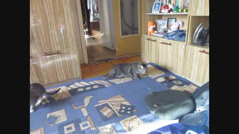 Котик увидел стул в разобранном состоянии