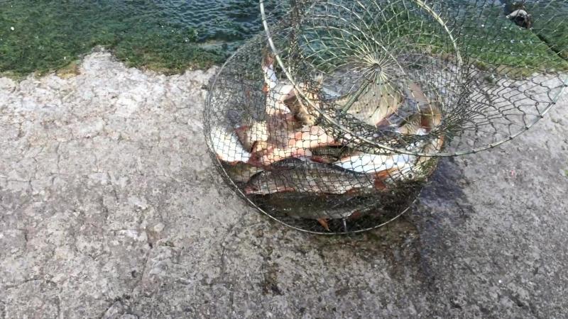 Рыбалка на откосе Днепродзержинск 2018
