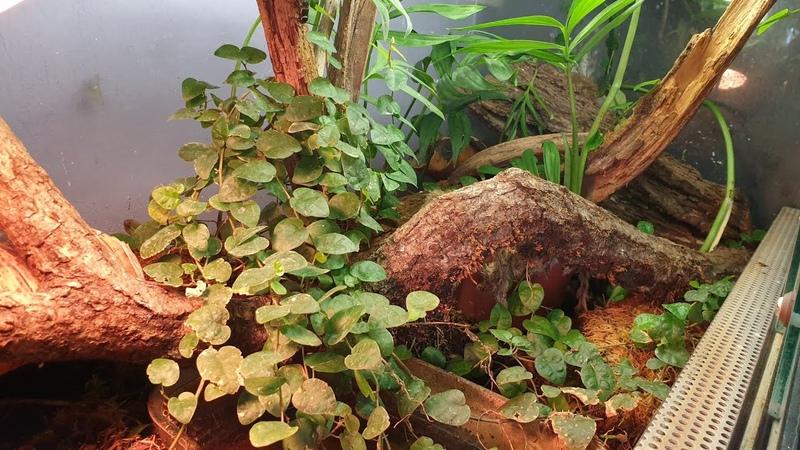 Выселяем пауканов из большого террариума Реновация из за понаехавших ящерок