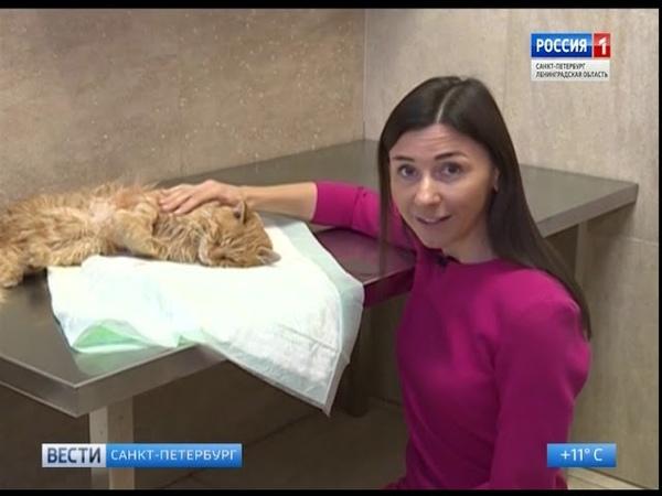 Вести Санкт-Петербург. Выпуск 11:40 от 26.09.2018