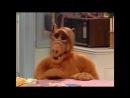 Alf Quote Season 4 Episode 5_Листья