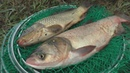 Рецепт быстрого приготовления технопланктона Ловля карпа и толстолоба My fishing