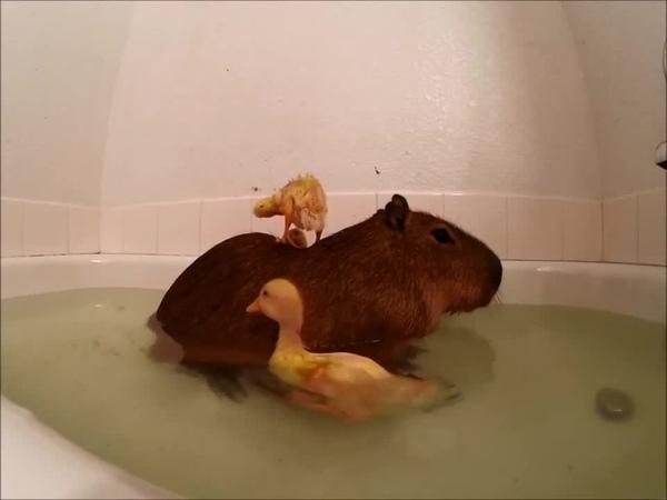 Rubber Ducky?