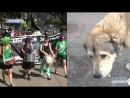 У центрі Харкова молодь протестувала проти жорстокого поводження з тваринами