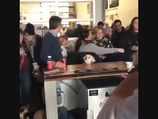 Dog absolutely loving 101 Dalmatians in bar