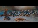 Jodorowsky's Holy Mountain-- Klen's Song