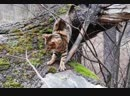Ещё одно видео про прогулку с котом