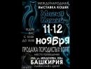 Международная выставка кошек Магия кошки 11-12 ноября 2017 г. г.Уфа ФФРБ