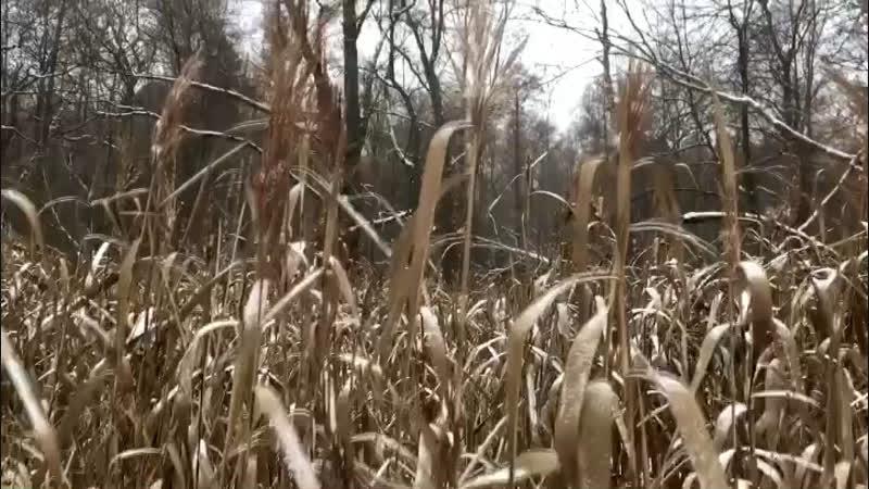 Травка в парке