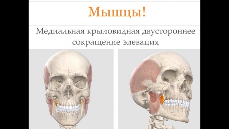 Кусочек презентации для курса по функциональной диагностике =)