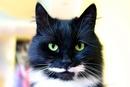 По усам можно определить настроение вашего кота
