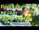 Обзор сада . Яблони . Сорта плодовых . ЛПХ Макаревич Уссурийск .