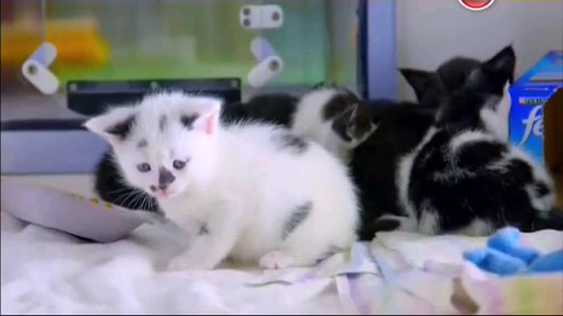 BBC жизнь кошек