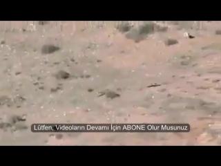 Dağlarda_KuRDu_Kovalayan,_Kangal_ve_Anadolu_Çoban_Köpekleri-1.mp4