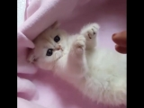 Cuteness Overload Cat
