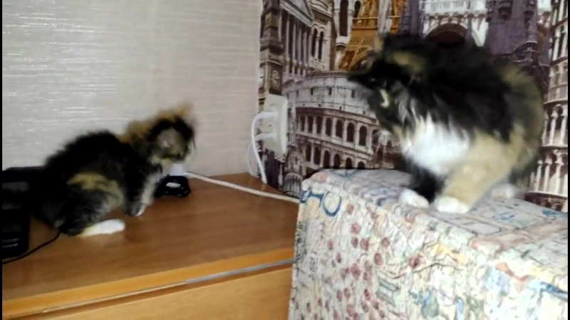 Котятки.mp4.mp4